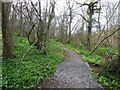 ST7374 : The Cotswold Way in Dyrham  Wood by Ian S