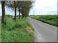 TG4103 : View along Hall Road, Reedham by Evelyn Simak
