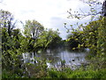 TM3887 : Pond off Chapel Road by Geographer