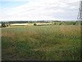 SP1164 : Wheatfield under power lines, Morton Bagot by Robin Stott