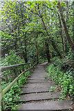 TL7835 : Woodland Walk, Castle Hedingham, Colne Valley, Essex by Christine Matthews