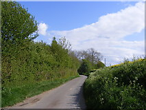 TM3787 : Great Common Lane, Ilketshall St.Andrew by Adrian Cable