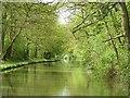SP4478 : Oxford Canal alongside All Oaks Wood by Rob Farrow