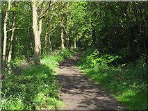 TM0221 : Tree lined footpath, Rowhedge by Roger Jones
