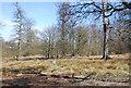 TQ5354 : Woodland, Knole Park by N Chadwick