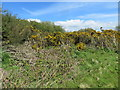 SM9111 : Gorse on Boltonhill by Peter Wood