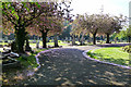 SK4833 : Cherry trees in Long Eaton Cemetery by David Lally