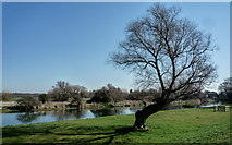 TL2870 : River Great Ouse from Hemingford Meadow by Kim Fyson