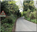 SO7138 : Cut Throat Lane narrows to single track near Ledbury by Jaggery