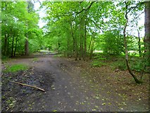 TQ0084 : Queen's Drive in Black Park Country Park by Shazz