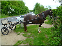 TQ0481 : Tethered horse by graveyard entrance on Iver Lane by Shazz