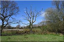 TQ8016 : Dead oak tree by Tim Heaton