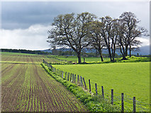 NH5857 : Outliers of Drummondreach Oakwood by Julian Paren