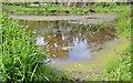 J3369 : Pond, Moreland's Meadow, Belfast by Albert Bridge