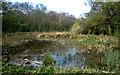 TL1682 : Aversley Wood by Kim Fyson