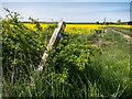 TL1581 : Waymark on track to Steeple Gidding by Kim Fyson