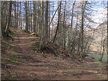 NY9449 : Paths in woodland at Derwent Head by Mike Quinn