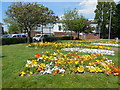 SZ6299 : Flowers in Falkland Gardens by Paul Gillett
