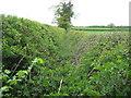 SP5518 : Wendlebury: Field drain by Nigel Cox