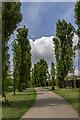 TQ3095 : Avenue of Poplar Trees, Oakwood Park, London N14 by Christine Matthews