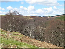 NY9449 : The valley of Beldon Burn west of Gibraltar by Mike Quinn