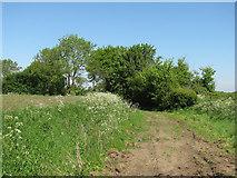 TL6344 : A bend in Homers Lane by John Sutton