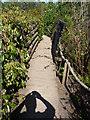 NT2475 : Royal Botanic Garden Edinburgh : On The Trail by Richard West