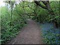 TQ5653 : Greensand Way on One Tree Hill by Chris Heaton