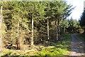NS7582 : Forest, Denny Muir by Richard Webb
