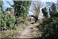 TQ5572 : Darent Valley Path by N Chadwick