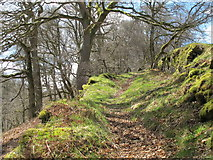 NY9449 : Path in woodland at Gibraltar Banks (2) by Mike Quinn