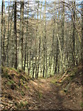 NY9449 : Path in woodland at Derwent Head by Mike Quinn