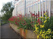 TQ3978 : Colourful weeds on the Thames Path by Stephen Craven