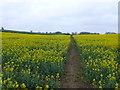 SP4647 : Footpath through the Crop by Nigel Mykura