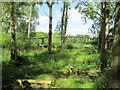 SP9123 : Open Woodland at Tiddenfoot Waterside Park by Chris Reynolds
