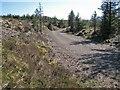 NG4025 : Glen Brittle Forest track by Richard Dorrell