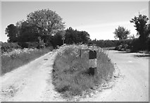 TM4592 : Lily Lane, Aldeby by Evelyn Simak