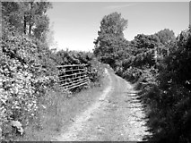 TM4592 : Path to St Mary's Road, Aldeby by Evelyn Simak