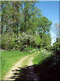 TM4592 : Track to St Mary's Road, Aldeby by Evelyn Simak
