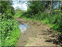 TM4592 : Muddy path by Sutton's Farm, Aldeby by Evelyn Simak