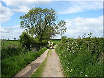 NY3459 : The Hadrian's Wall Path leaving Beaumont by David Purchase