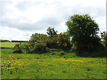 NY3358 : Fields at Wormanby Farm by David Purchase