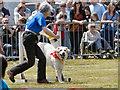 SD6342 : Dog Agility Trials, Green Lane Showground by David Dixon