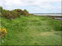 NY2462 : The shoreline at Port Carlisle by David Purchase