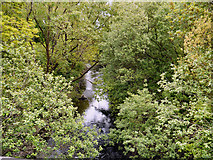 SJ9398 : River Tame by David Dixon