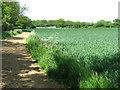 TM4193 : Footpath to Raveningham Road by Evelyn Simak
