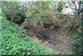 TQ6769 : Dried up pond by N Chadwick