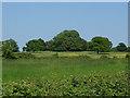 SU9175 : Farmland near New Lodge by Alan Hunt