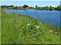 TL4283 : Private fly fishing lake - Mepal pits by Richard Humphrey