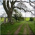 NT9507 : Farm track, Biddlestone by Richard Webb